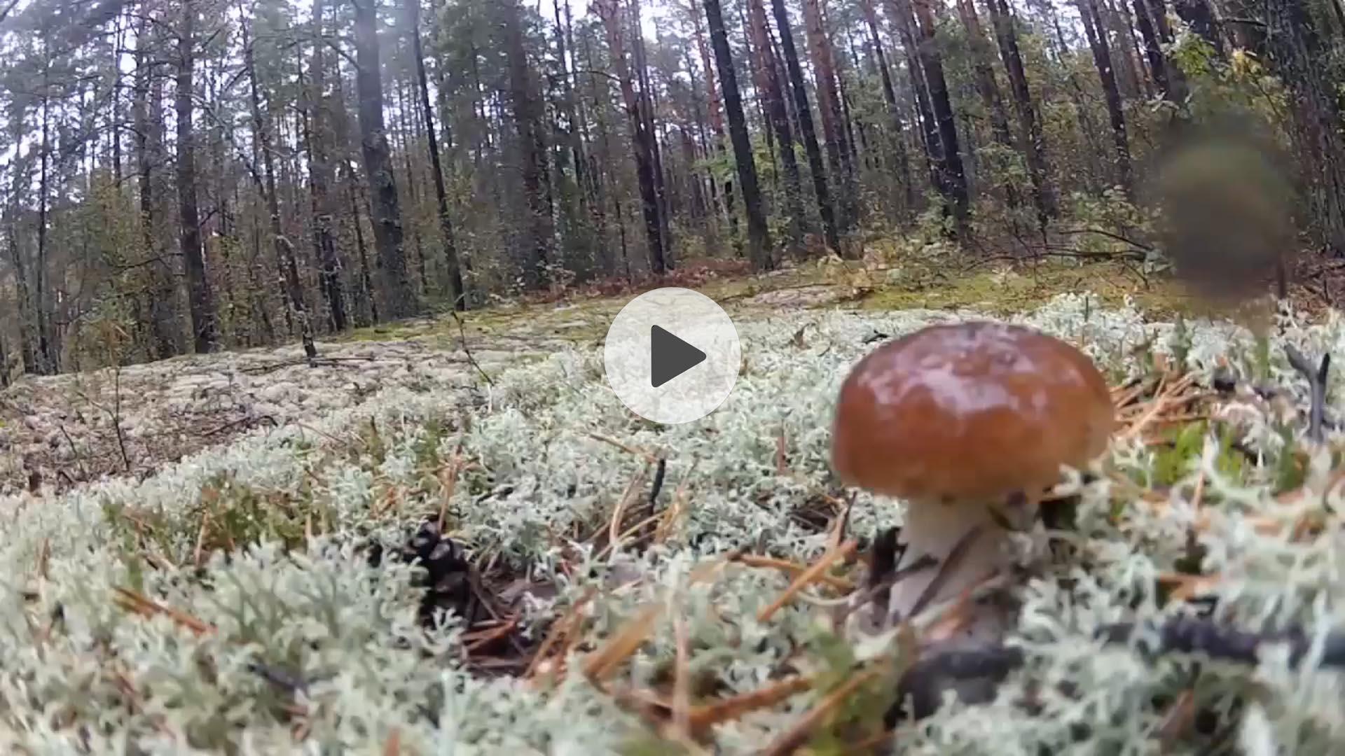 видеомонтаж путешествий